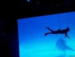 fliegender Taucher, flying diver show